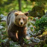Le Monde Animal Réagira Aux Humains Avec Plus De Virus