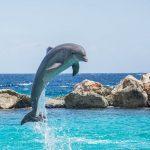 10 curiosités sur les baleines et les dauphins à leur époque
