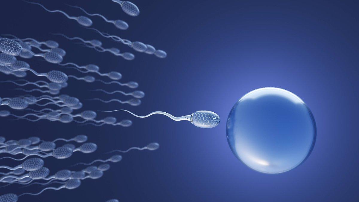 L'hypothèse Vieille De 300 Ans Est Réfutée: Le Sperme Ne