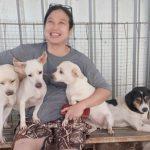 Indonésie: une femme sauve plus de 1000 chiens de la mort