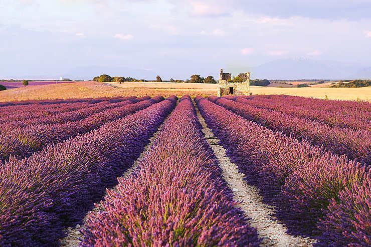Provence Les Routes De La Lavande