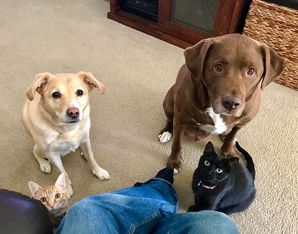 20 chiens affamés qui savent demander de la nourriture sans se faire résister