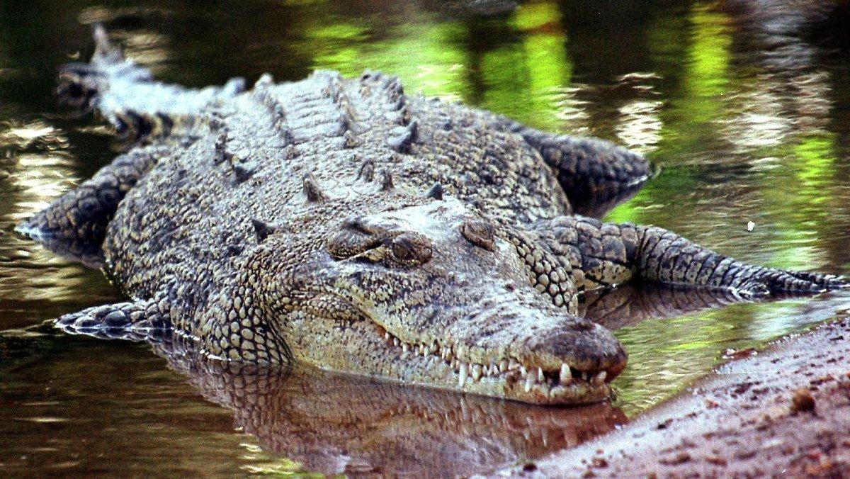 Nouvelle Interdiction De Baignade Pour Unstrut: La Recherche De Crocodiles