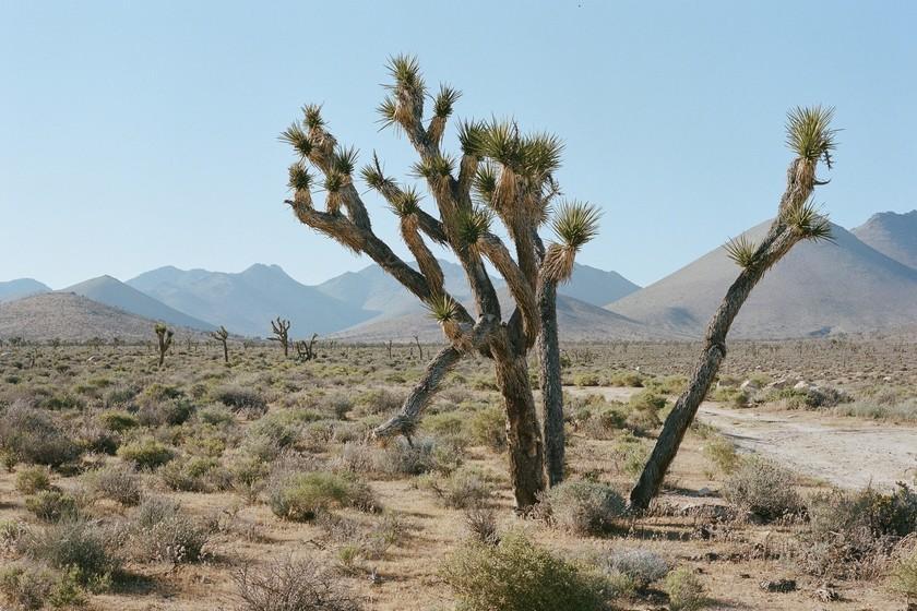 Death Valley (Californie) enregistre 54,4 ° C, s'il est confirmé, ce sera le record de la température la plus élevée jamais enregistrée sur la planète
