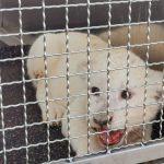 Quatre Personnes Blessées: Un Bébé Lion Sauvé Dans Un Accident