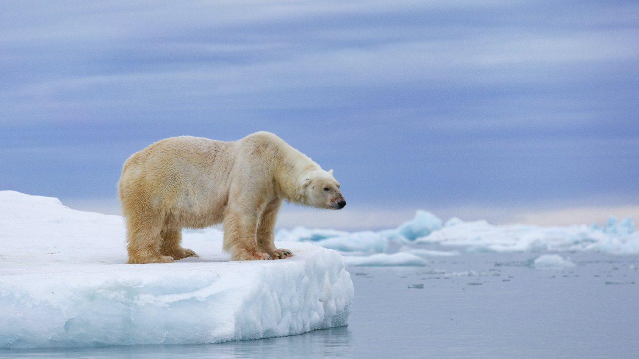 La glace de mer d'été dans l'Arctique devrait pratiquement disparaître d'ici 2050. Zaruba Ondrej / AP