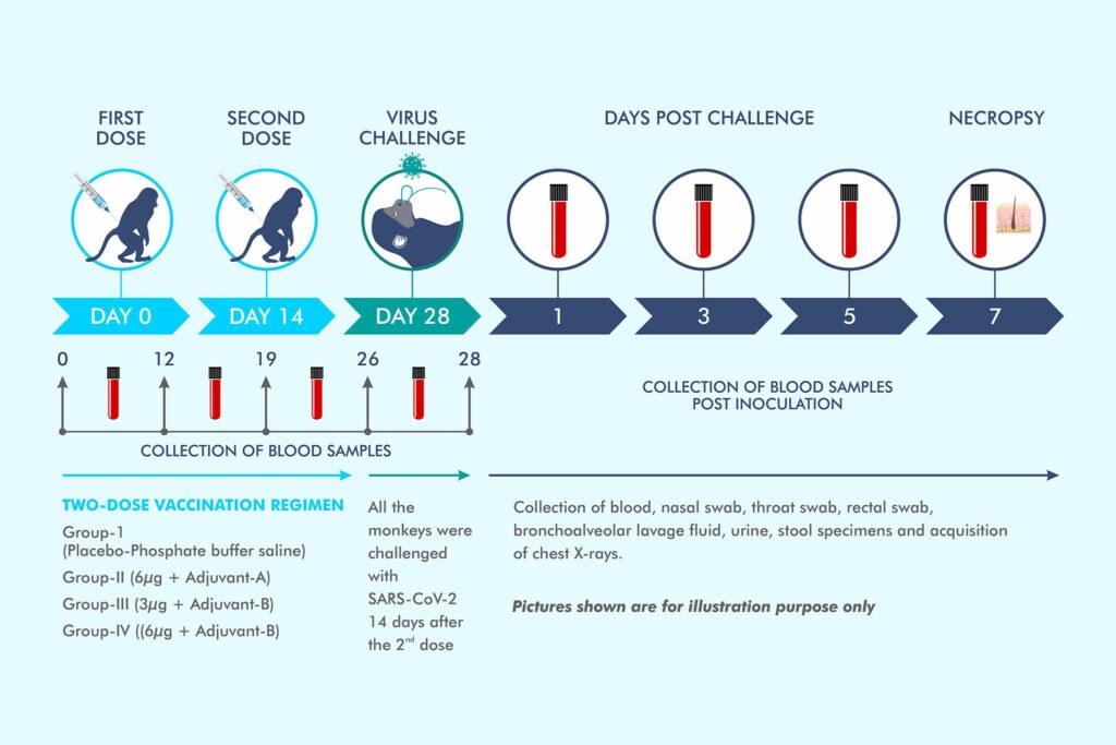 Bharat Bios COVAXIN Huit points à retenir des essais réussis sur des animaux du vaccin expérimental COVID19