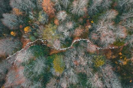 55677 - Chemin forestier - Mehmet Aslan