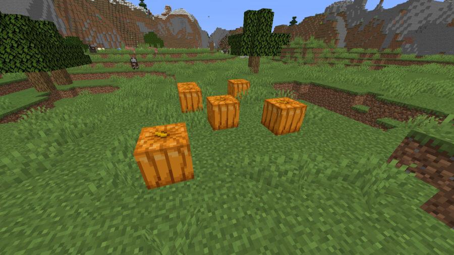 citrouilles engendrées dans un biome des plaines à Minecraft