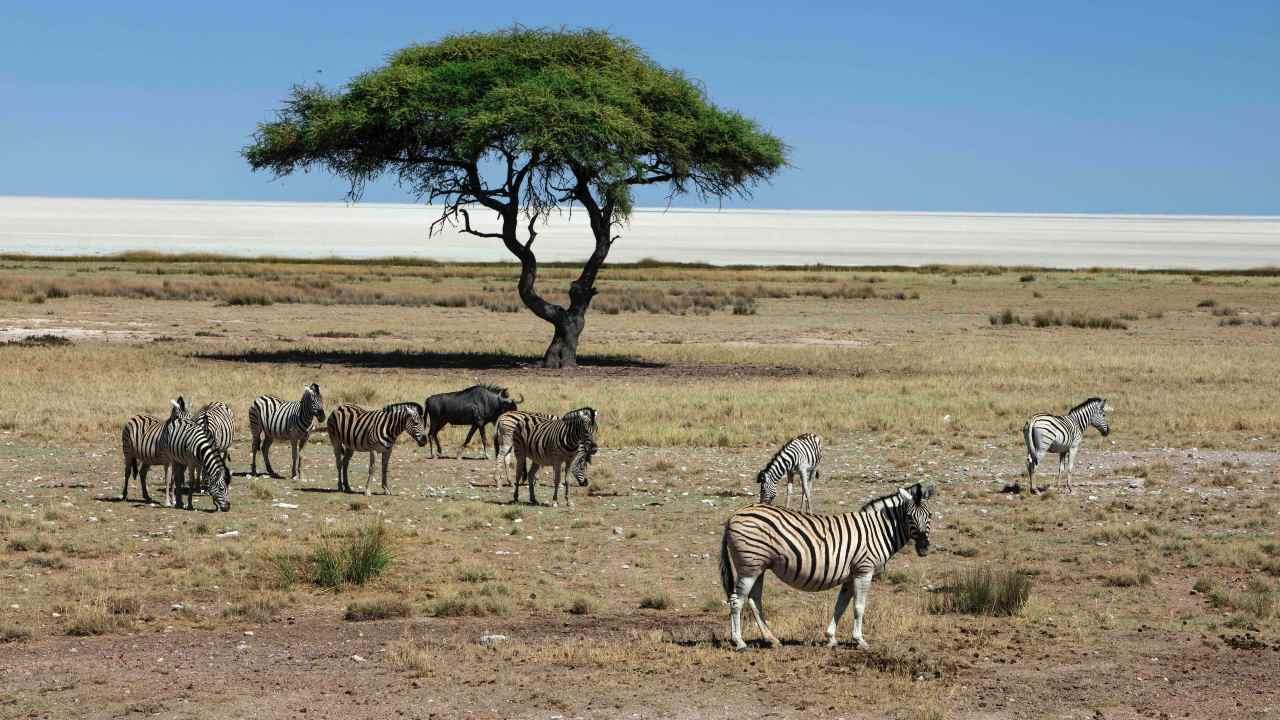 La faune a chuté des deux tiers en 50 ans, le risque de pandémie augmente avec la perte d'habitat supplémentaire: Living Planet Index