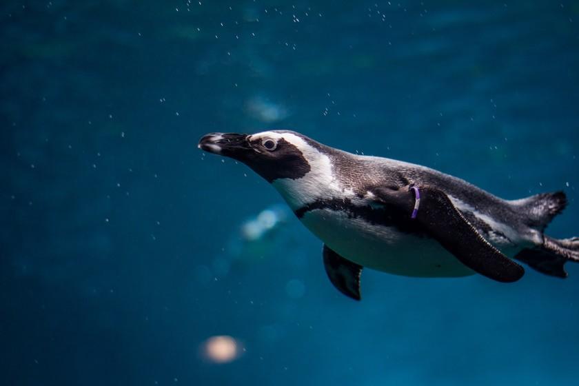 Le monde vu à travers les yeux des animaux: Crittercam, la caméra qui a permis à National Geographic de capturer des images spectaculaires