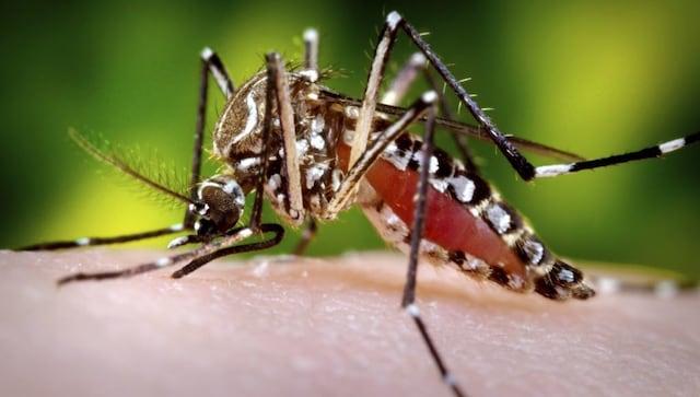 Les anticorps de la dengue pourraient conférer une immunité contre le COVID-19, rapporte une étude non publiée