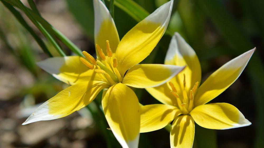 Les Fleurs Jaunes Sont Fortes En Thérapie Florale