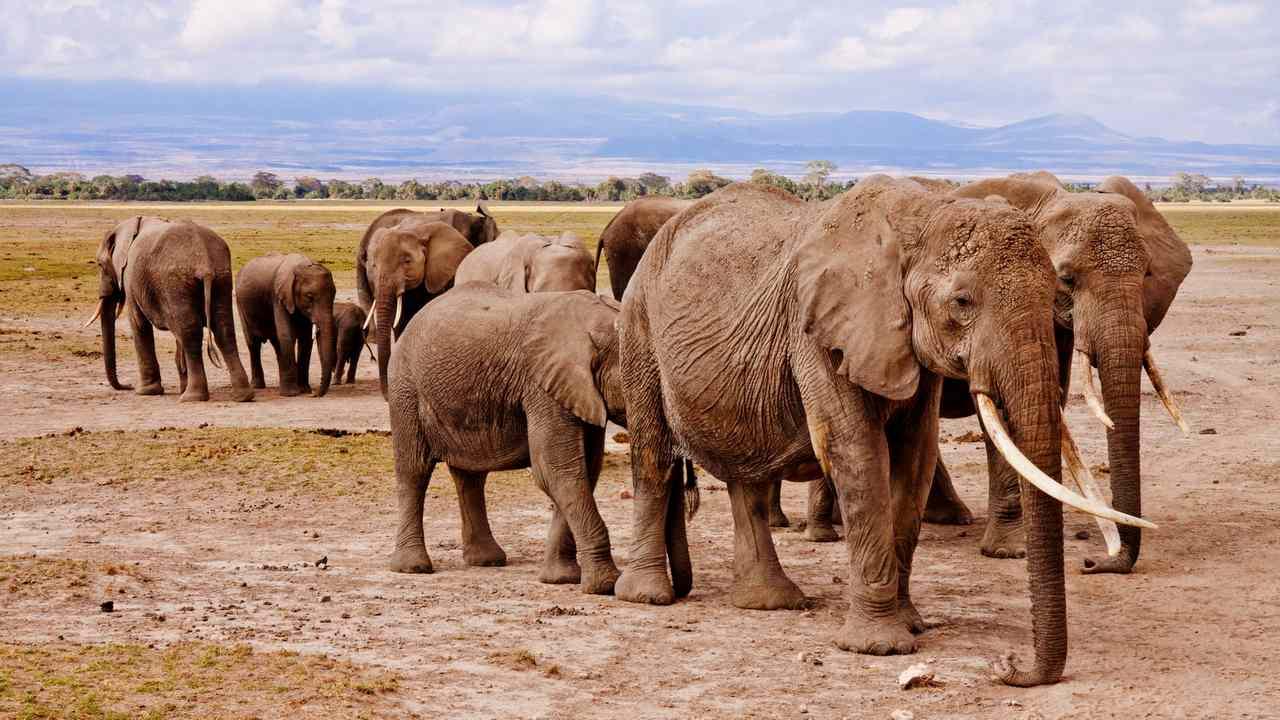 Total de 1256 cas de commerce illégal, de braconnage d'animaux sauvages enregistrés entre 2017-2019;  2,313 délinquants arrêtés: Govt