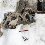 Une Chèvre Momifiée De 400 Ans Retrouvée Gelée Dans Les