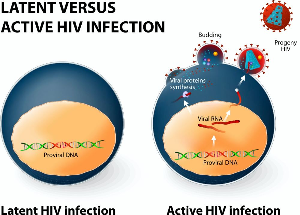 Le COVID19 persiste-t-il dans le corps Ce que nous savons des virus en général restant dans les testicules du cerveau