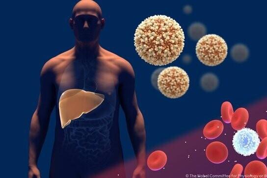 Pourquoi la découverte du virus de l'hépatite C mérite un prix Nobel de médecine: Alter, Houghton et Rice gagnent 2020