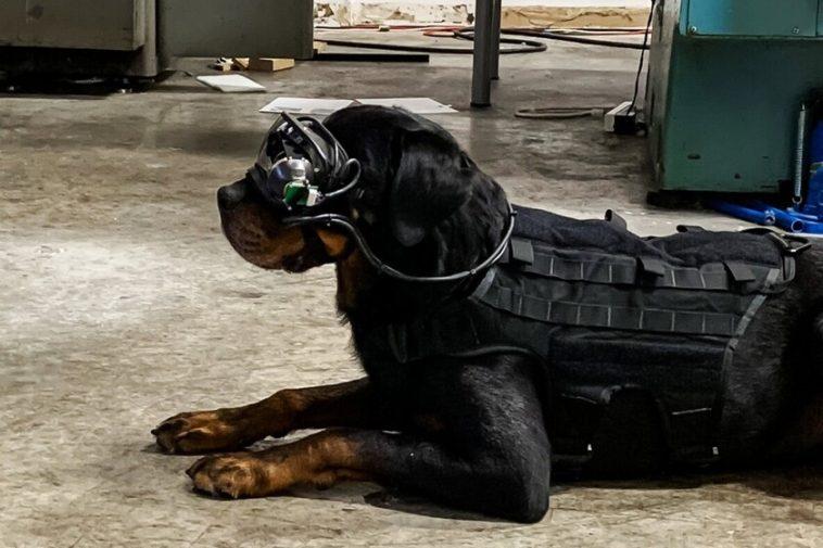 L'armée américaine teste de nouvelles lunettes de réalité augmentée ... pour chiens