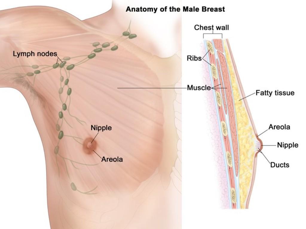 Mois du cancer du sein Les hommes succombent aussi au cancer du sein Tout ce que vous devez savoir