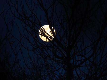 Flou bleu de pleine lune