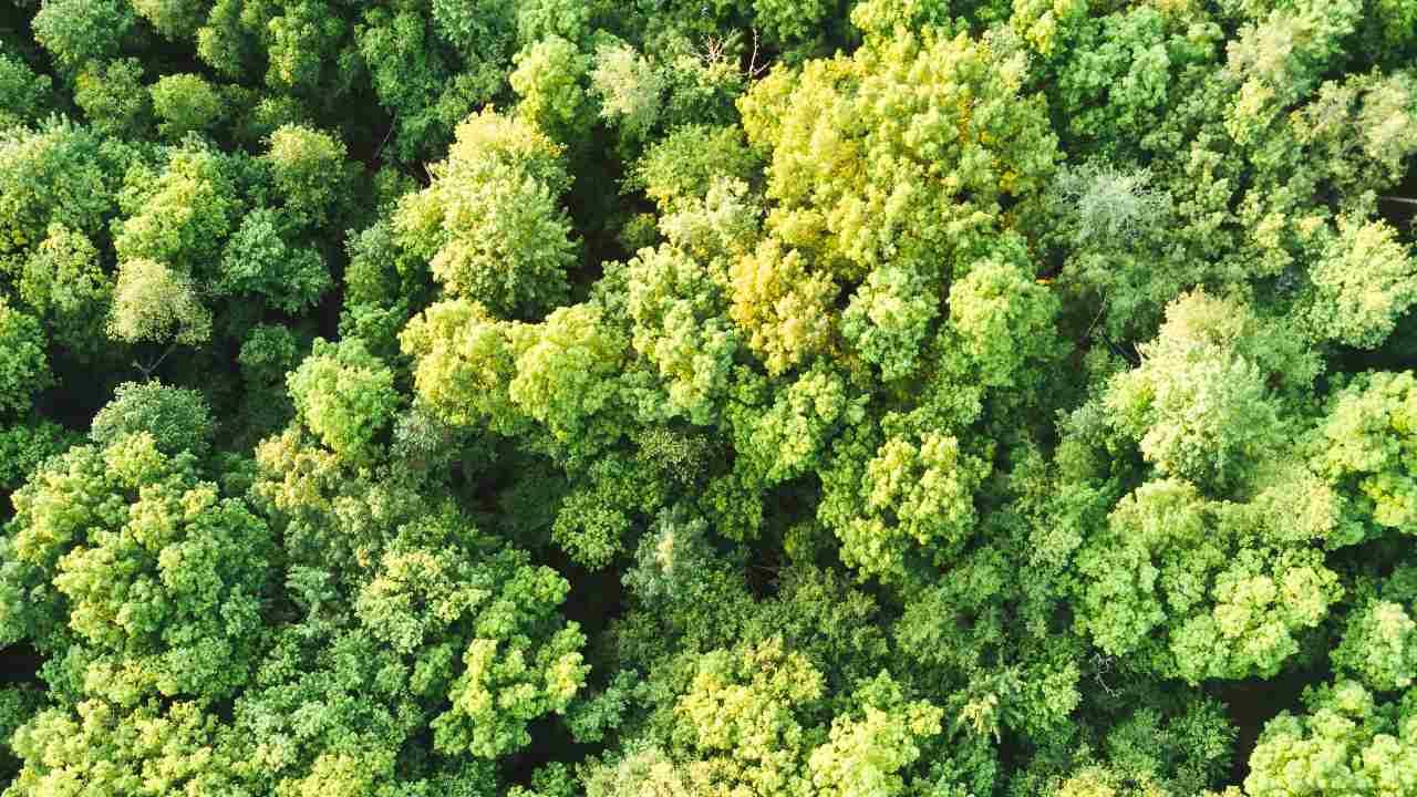 Combien de plantes avons-nous complètement détruites?  Voici cinq histoires d'extinction