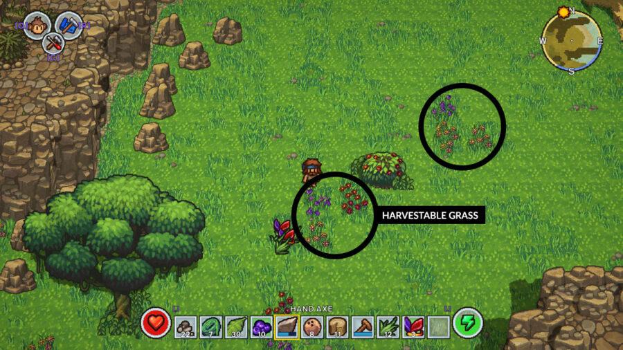 Un exemple d'herbe récoltable dans The Survivalists