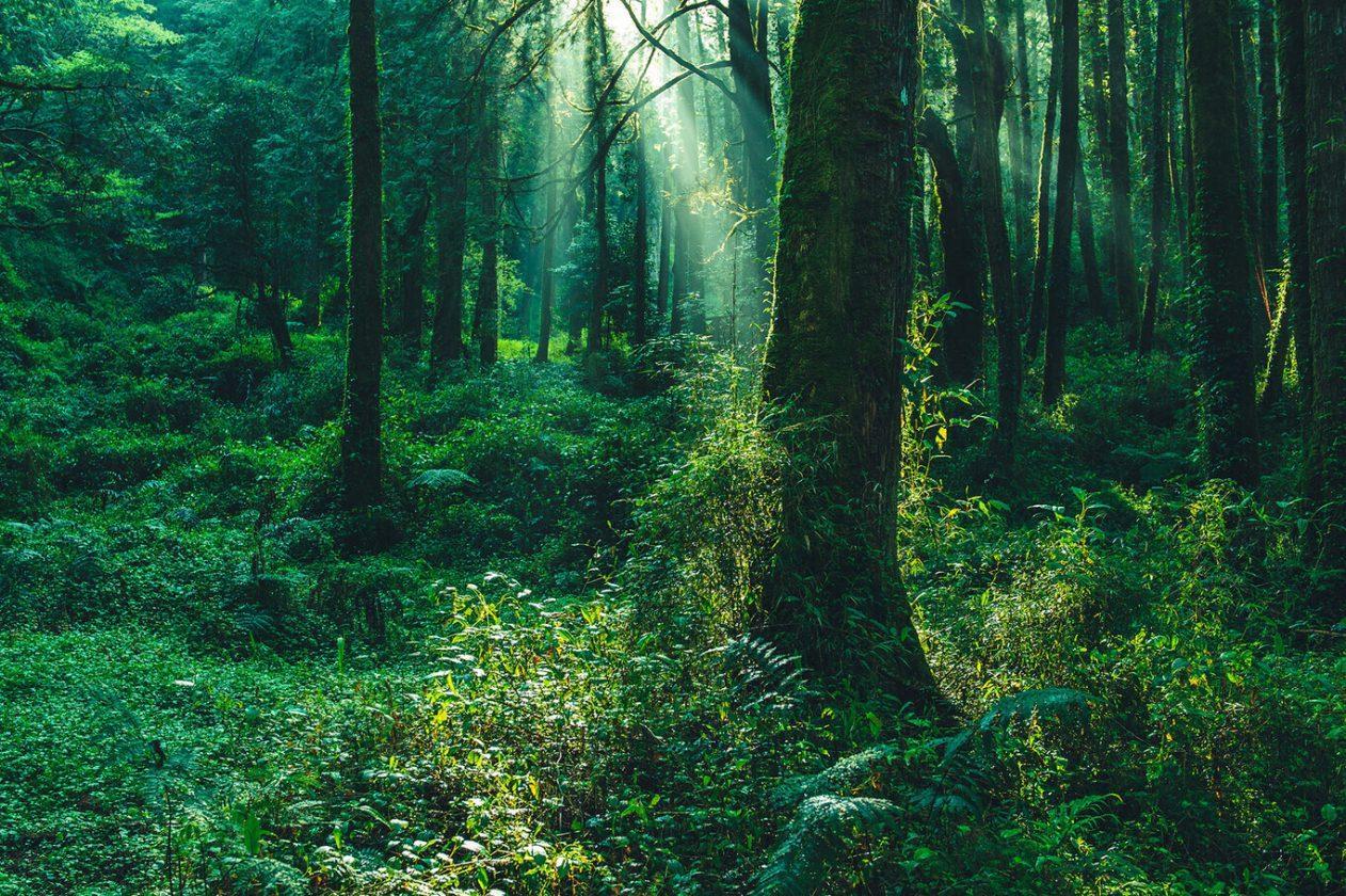 Comment nous pouvons tous contribuer à arrêter le changement climatique
