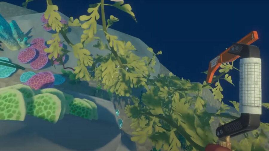 Exemple d'algues de radeau