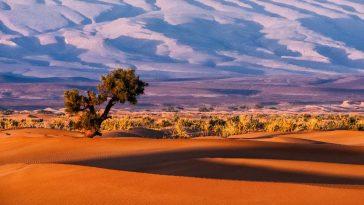 Des Millions D'arbres Innombrables Parsemant Le Sahara Et Les Déserts
