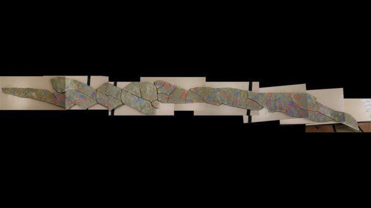 Des Ptérosaures De La Taille D'un Corgi Ont Marché Sous