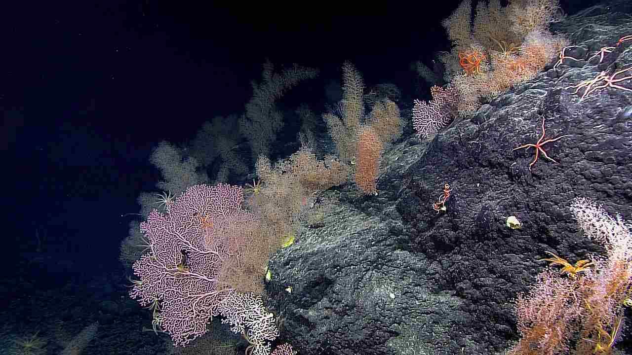 Fort déclin des coraux de la Grande Barrière de Corail au cours des 25 dernières années, irréversible: étude