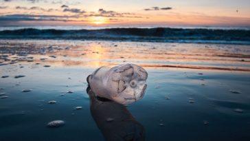 La Guerre Contre Le Plastique Nous Détourne De La Pollution