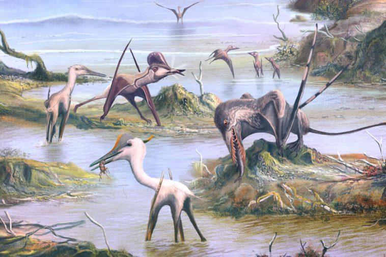 Le vol des ptérosaures: comment l'évolution a pris des flyers maladroits et inefficaces et les a transformés en machines aéronautiques presque parfaites