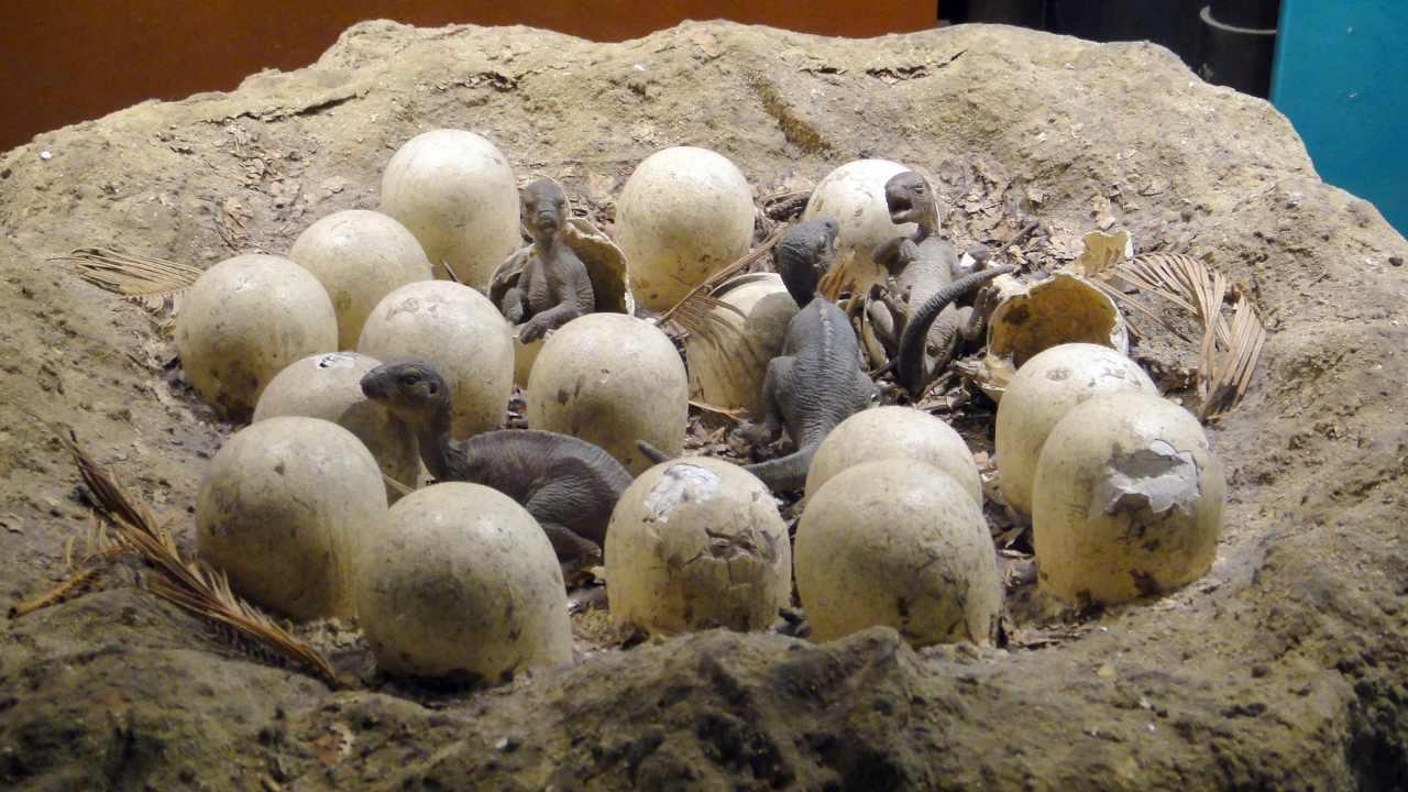 Les œufs De Dinosaures Du Tamil Nadu Se Révèlent être