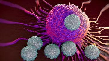 Un Médicament Trompe Les Cellules Cancéreuses En Se Faisant Passer