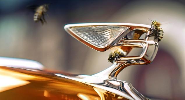 Adieu Les Emblématiques W12 Et V8. Bentley Passe à 100%