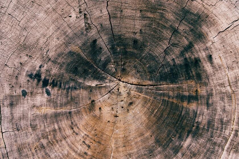 L'écho des supernovae: elles trouvent la piste d'explosions à des milliers d'années-lumière dans les anneaux des arbres