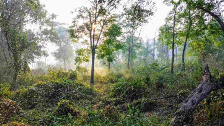 Pandémies Liées à Des Forêts Fragmentées, Perte De Biodiversité? Ce