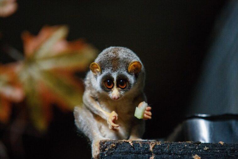 Madagascar se divise en petites îles au rythme de sept millimètres par an