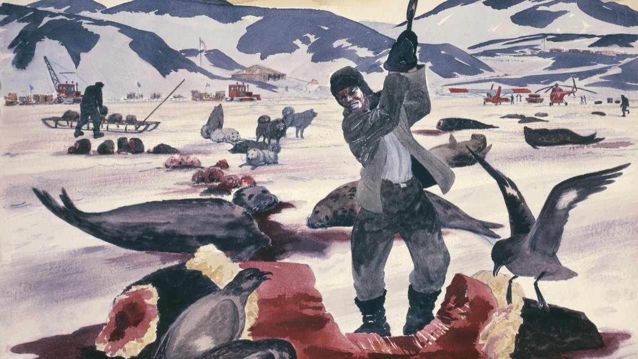 Nous Avons Profité De L'abattage De La Faune De L'antarctique