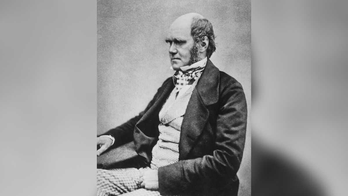 2 Des Célèbres Cahiers De Darwin, Y Compris Le Croquis