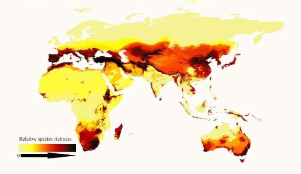 Un regard sur la richesse spécifique des abeilles dans le monde, montrant comment les abeilles préfèrent les régions arides et tempérées plutôt que les tropiques.  Les zones avec des couleurs plus foncées ont plus d'espèces.  Crédit image: ORR ET AL./CURRENT BIOLOGY
