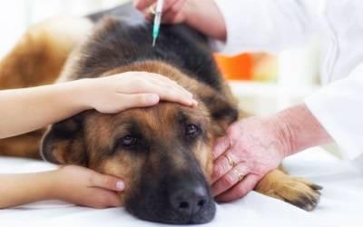 empoisonnements chez les chiens