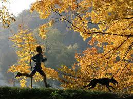 races de chiens pour les coureurs