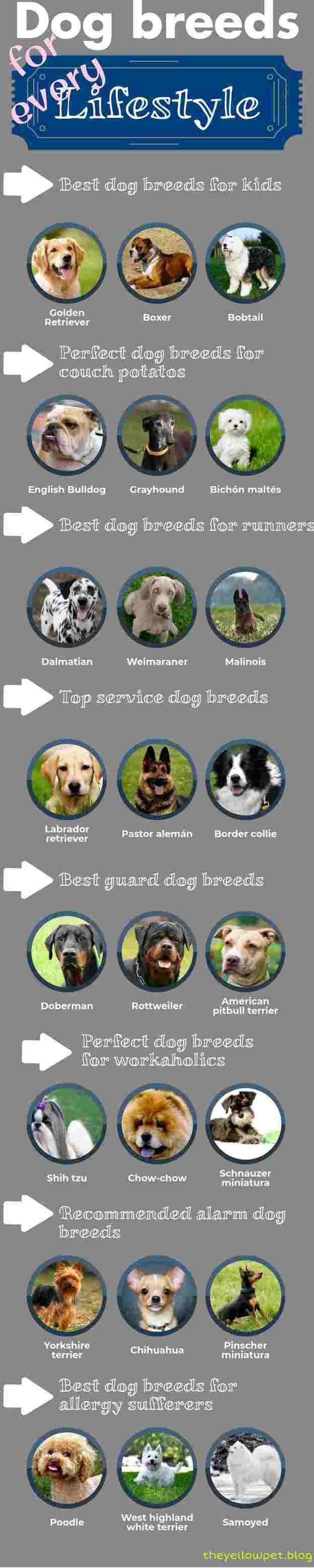 races de chiens pour tous les styles de vie