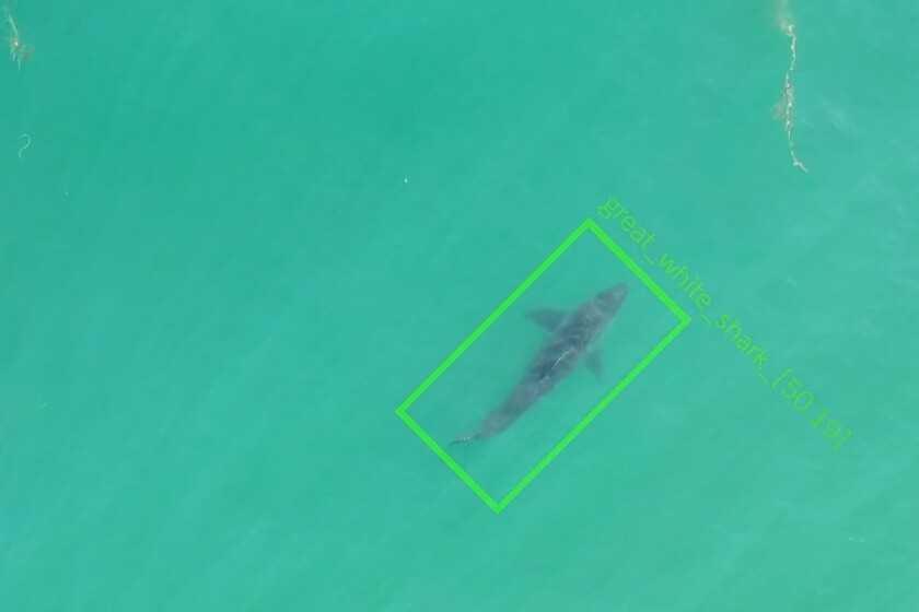 Ces drones pour détecter les requins à l'approche de la plage envoient des alertes en temps réel pour rassurer les baigneurs
