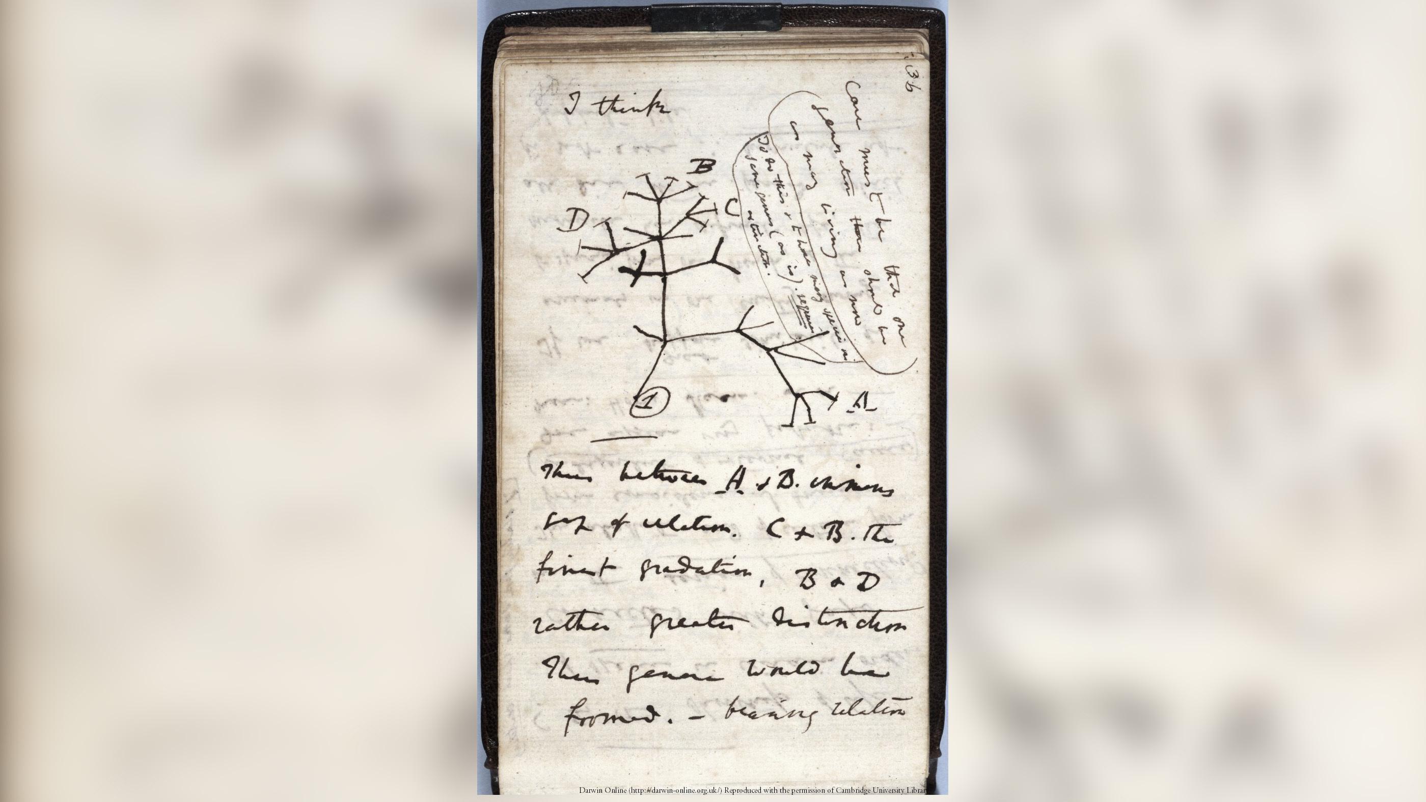 Charles Darwin a écrit