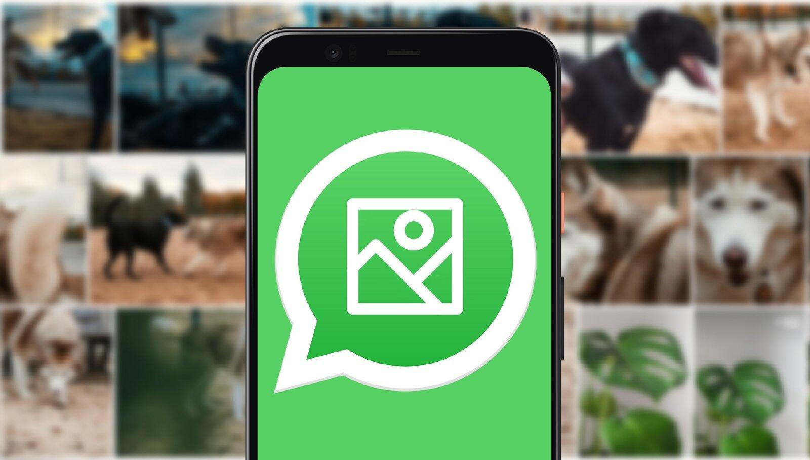 Enregistrer les photos WhatsApp dans la galerie