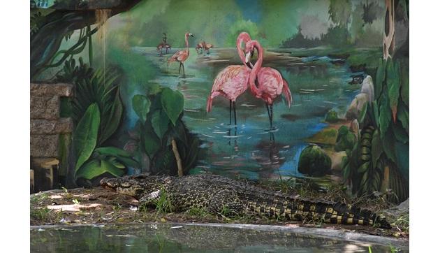 La colonne Zai Whitaker Une deuxième expédition de verrouillage de la banque de crocodiles de Madras