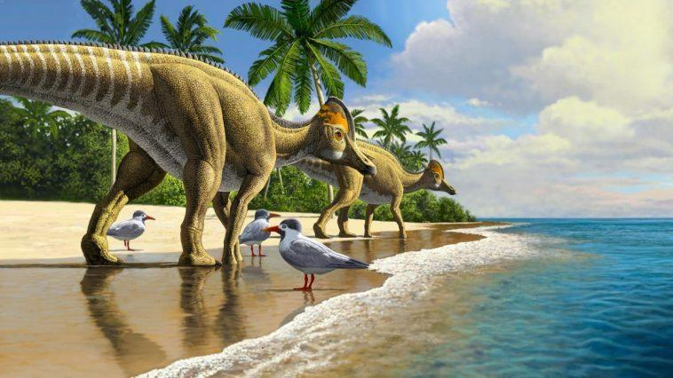 Le Fossile D'un Dinosaure à Bec De Canard A été